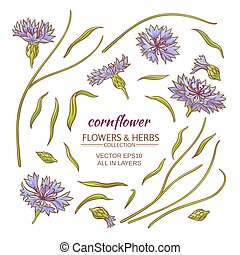 cornflower vector set - blue cornflower vector set on white...
