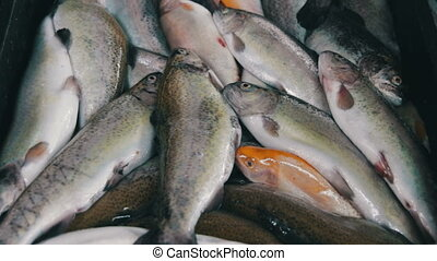 Fish Market - Fish market Fresh sea fish trout in ice on the...