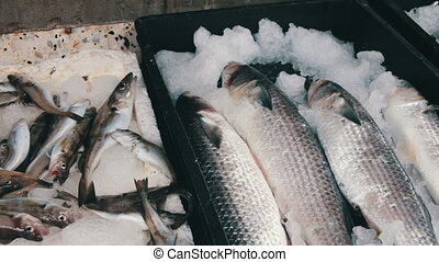 Fresh Fish in Ice on the Counter Market - Fish market. Fresh...