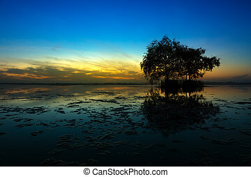 Silhouette tree with blue sky in the morning