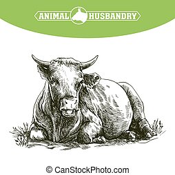 sketch of cow drawn by hand livestock cattle animal grazing...
