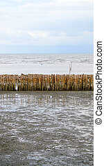manmade bamboo fence on mangrove beach
