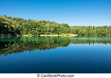 Landscape on a lake with trees
