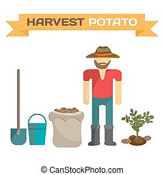 Man harvesting potato in the field, cartoon flat vector...