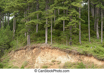 Forest erosion