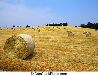 Bales on the field - Landscape of a field with bales of hay