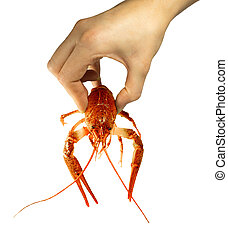 Nature baleen boiled red crawfish in a female hand. - Nature...