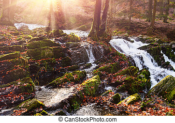 waterfall in misty autumn forest at sunset, Harz National...
