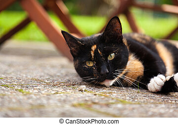 Cute lazy cat laying on rough concrete