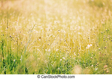 Grassy field with long leaf grass and wild flowers, vintage...