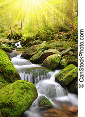 Mountain creek - Mountain stream in the National park...