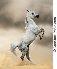 arabian horse rearing in dust