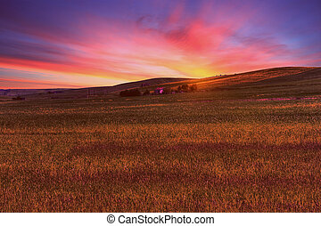grass field landscape under sunset