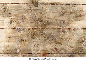 Dried Fruits of the Cape Gooseberry - Detail of the dried...