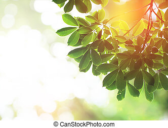 Green leafs in summer with burst light