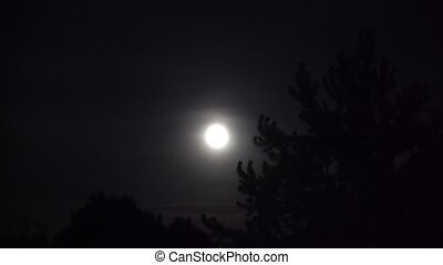 Full Moon with Night Clouds and Large Wicked Tree - Full...