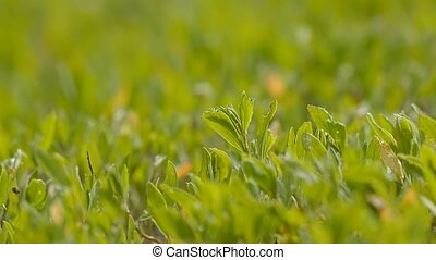 under the sun green grass and leaves slow motion video -...