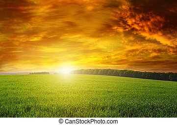 hermoso, verde, ocaso, campo