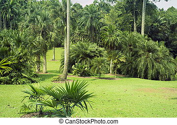 Botanical garden - fresh tropical landscape from famous...