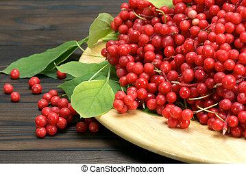 Chinese schizandra - red ripe berries - Schisandra chinese...