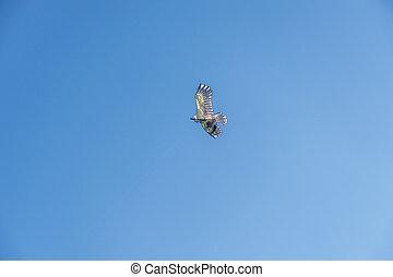 Kite flying on the sky