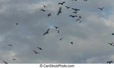 flock of black birds in the sky