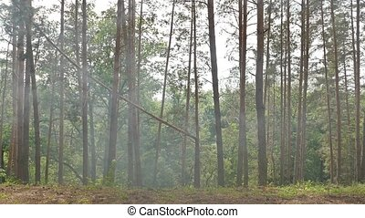 forest pine smoke slow motion video - forest pine smoke...