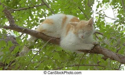 light red cat snoozing on a branch of slow motion video -...