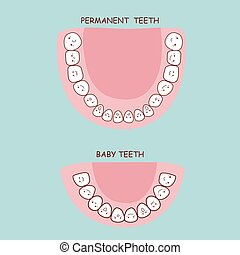 permanent teeth and baby teeth, great for health dental care...