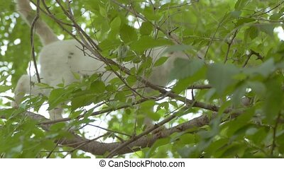 the branches bright cat walks slow motion video - the...