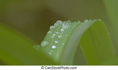 raindrops on the leaves of grass slow motion video