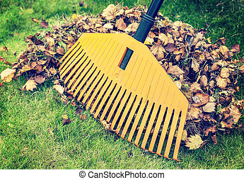 Autumn leaves with rake - Pile of fall leaves with rake on...