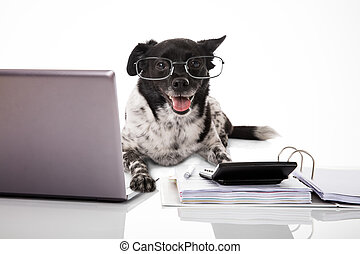 Dog Wearing Eyeglasses With Laptop And Calculator