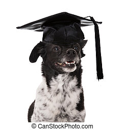 Graduated Dog Wearing Mortar Board Over White Background