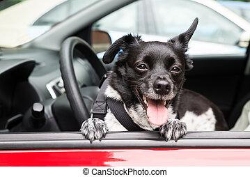 自動車, 犬, 見る, 窓, によって, 開いた