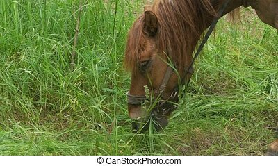 closeup of a horse chews grass slow motion video - overcast...