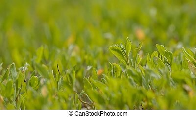 close up of green grass in the sun slow motion video