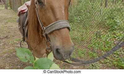 horse chews branch of human hands slow motion video - cloudy...