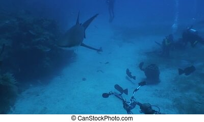 Dangerous Shark Underwater Video Cu - Underwater Cuba...
