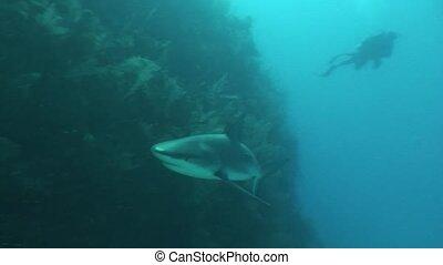 Dangerous Shark Underwater Video Cu - Underwater Cuba...