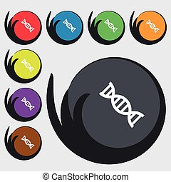 DNA icon sign. Symbols on eight colored buttons. Vector