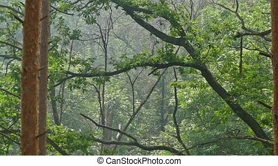 bent tree in the forest slow motion video - curved deciduous...