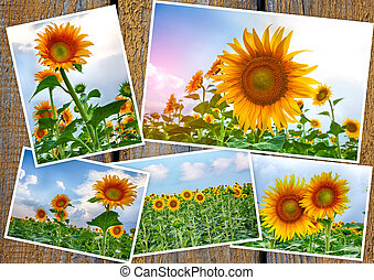 Collage from colors of a sunflower