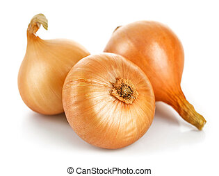Three fresh onions harvest vegetable. Isolated white