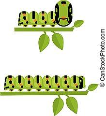 Young and big caterpillars set