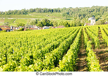vineyards near Gevrey-Chambertin, Cote de Nuits, Burgundy,...
