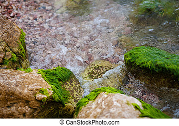Green algae on water,  sea  at rocks.