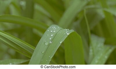in raindrops grass slow motion video - grass with water...