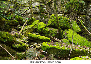 Undergrowth with Green Moss - Green undergrowth with moss....