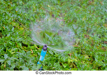 Sprinkler water working in the garden.